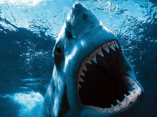 Review Jaws 2 1978 Bill S Movie Emporium